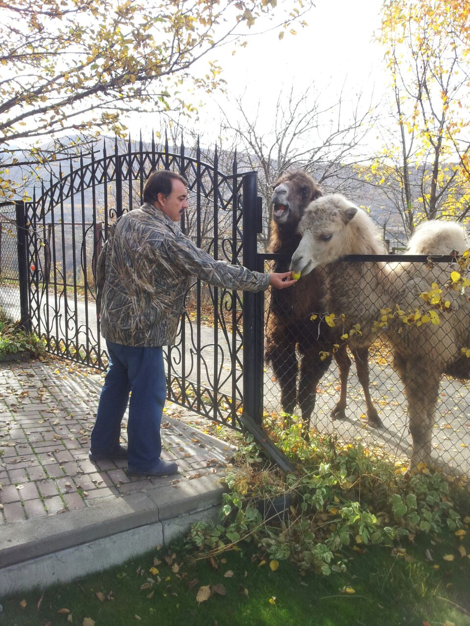 Kazakhstan - Llama