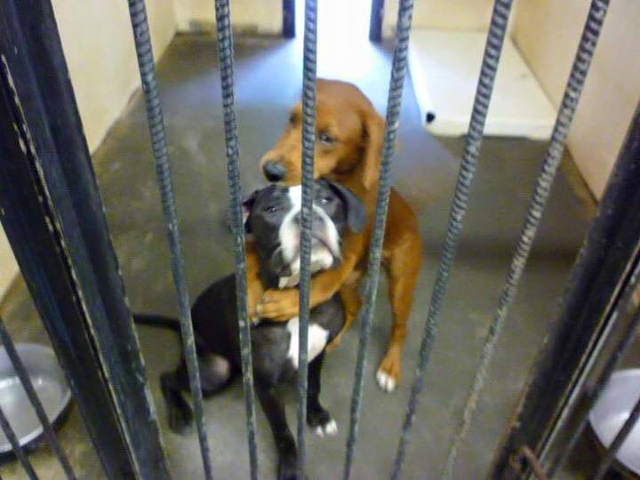Viral photo of 2 dogs hugging saved them from being put down