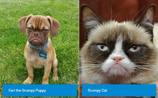 GRUMPY BATTLE: Earl The Grumpy Puppy vs Grumpy Cat